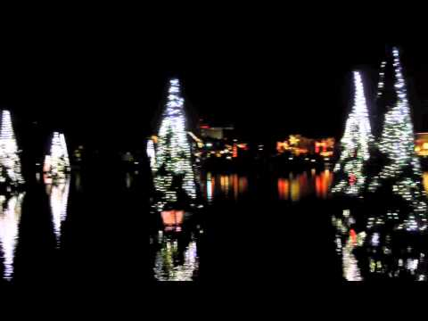 Dancing Lights on the Sea of Trees at SeaWorld Orlando's Christmas Celebration