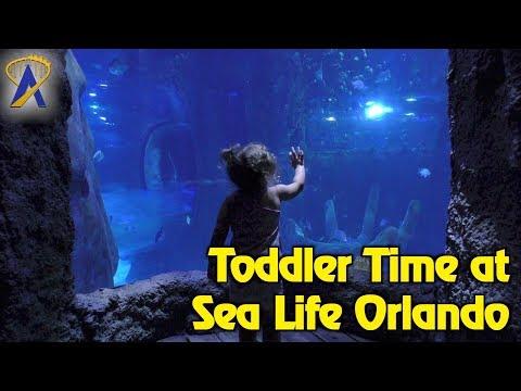 Toddler Time at Sea Life Orlando Aquarium