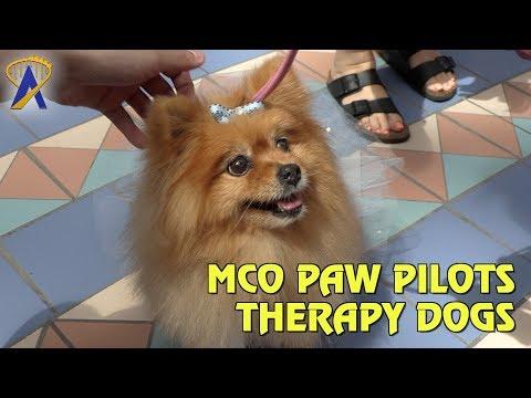 MCO Paw Pilots debut at Orlando International Airport