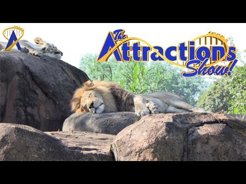 The Attractions Show - The Lion King at Animal Kingdom; Jurassic World: The Ride; latest news