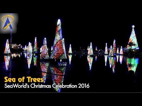 Sea of Trees dancing lights at SeaWorld's Christmas Celebration 2016