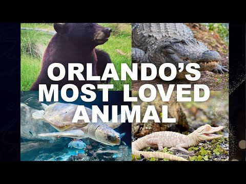 Orlando's Most Loved Animal | Visit Orlando | Frontier Airlines