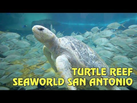 Turtle Reef Area Overview at SeaWorld San Antonio
