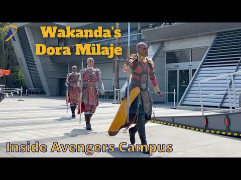 Full Warriors of Wakanda Show in Avengers Campus at the Disneyland Resort