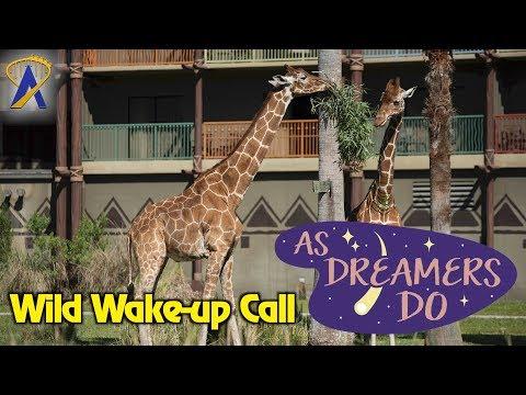 As Dreamers Do - 'Wild Wake-up Call at Animal Kingdom Lodge' - Aug. 16, 2017
