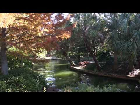 Landscaping in the Parks: Cold weather effects at Universal Orlando Resort