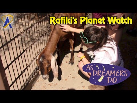 Running Wild at Rafiki's Planet Watch - As Dreamers Do