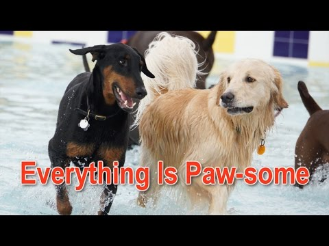 Everything is Paw-some as Legoland Florida Water Park goes to the dogs