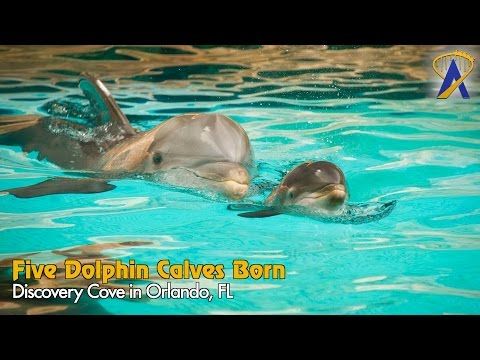 Five Bottlenose Dolphins Born at Discovery Cove