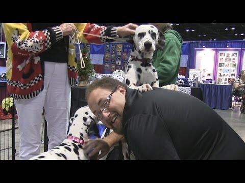 Attractions - The Show - Dec. 26, 2013 - La Nouba 15th anniversary, Celebrate Dogs, plus latest news