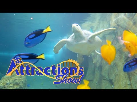 The Attractions Show - Turtle Reef at SeaWorld San Antonio; Monster Jam World Finals; latest news