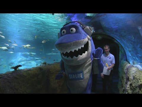 Inside Sea Life Aquarium Orlando at I-Drive 360