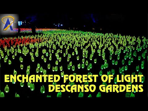 Enchanted Forest of Light at Descanso Gardens in California