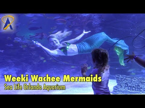 Mermaids from Weeki Wachee Springs visit Sea Life Orlando Aquarium