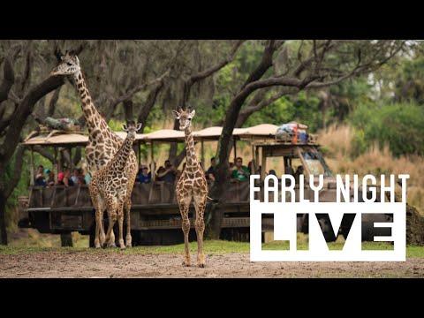 Early Night Live: Going on Safari at Disney's Animal Kingdom