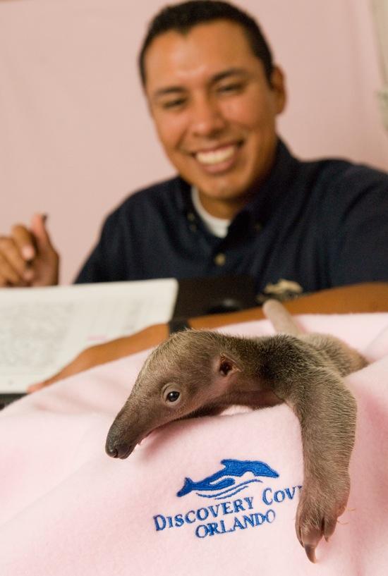 dc-baby-anteater.jpg