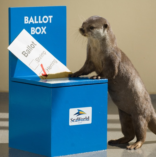 you-otter-vote.jpg