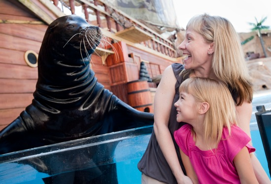 animal-shows-and-photo-experience-at-seaworld-orlando-with-sea-lion