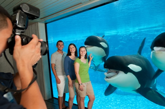 animal-shows-and-photo-experience-at-seaworld-orlando-with-shamu