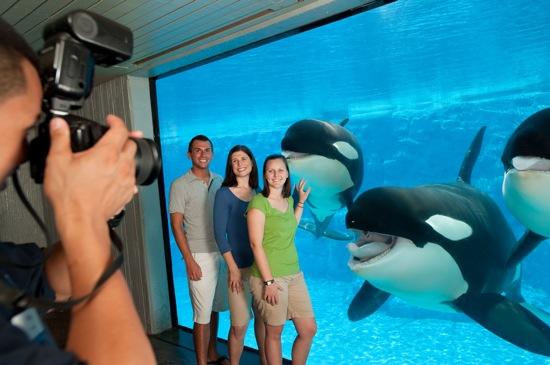 animal-shows-and-photo-experience-at-seaworld-orlando-with-shamu