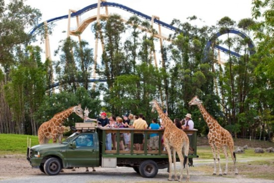 Florida residents get free safari tour with single day admission to busch gardens attractions for Busch gardens free military 2017