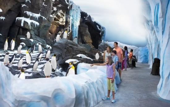 Antarctica at SeaWorld Orlando