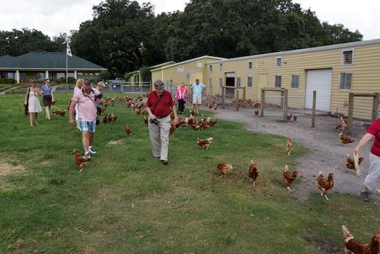 Orlando farm to restaurant 12