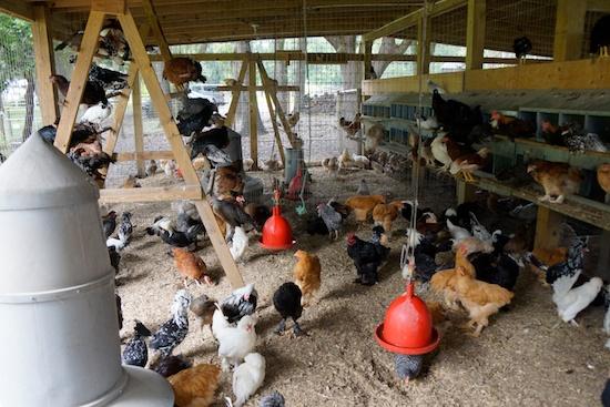 Orlando farm to restaurant 13