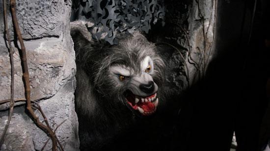wolf4