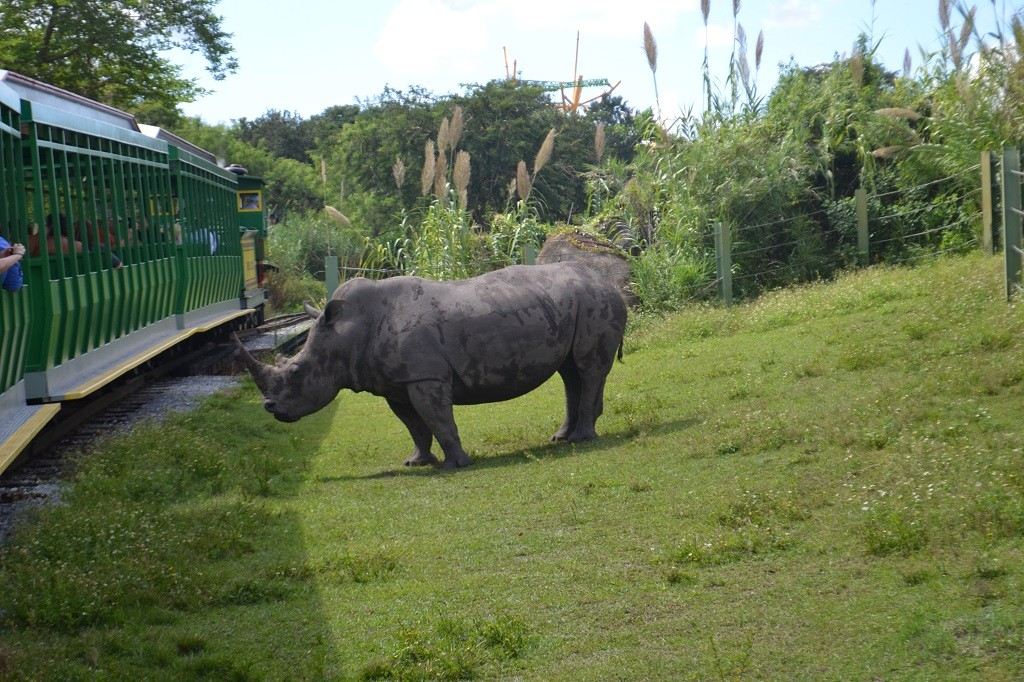 Photo update: Busch Gardens Tampa - New animals, decorations and ...