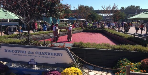 Cranberry bog at Epcot Food and Wine festival
