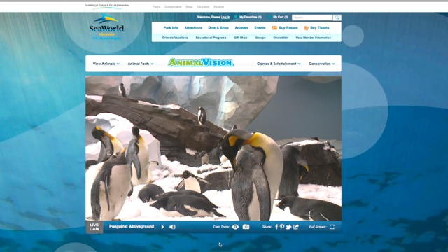 SeaWorld AnimalVision