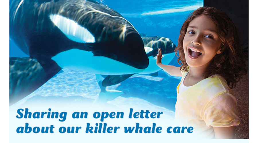 girl interacts with killer whale in seaworld open letter cover