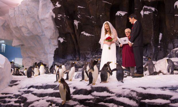 Antarctica Wedding seaworld orlando