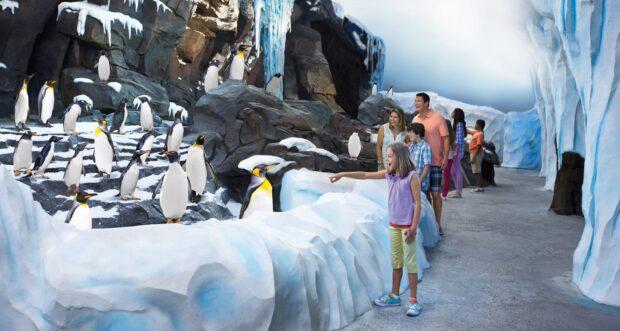 Antarctica Penguin Habitat