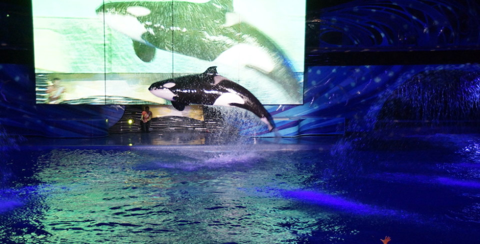 Shamu jumping at night at seaworld orlando