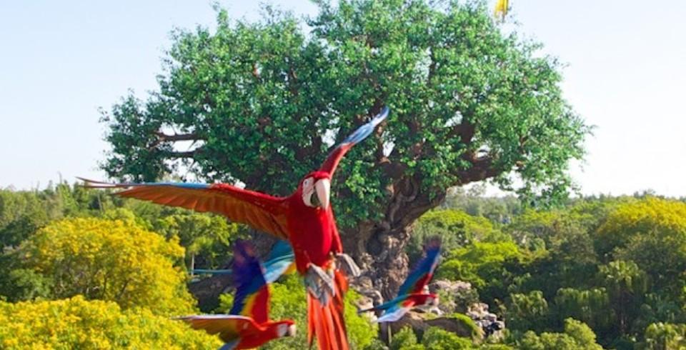 Winged Encounters at Animal Kingdom