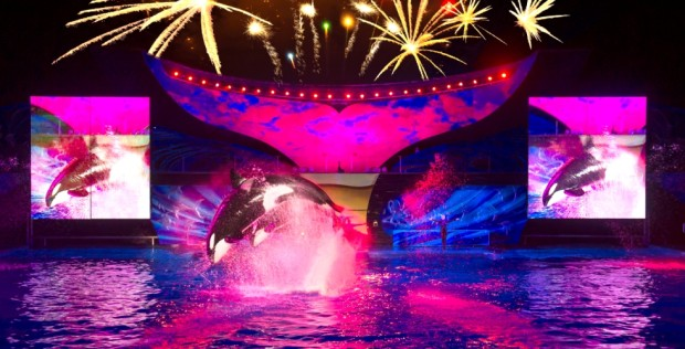Shamu Light up the Night seaworld orlando