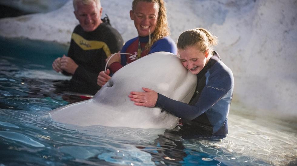 SeaWorld Orlando helps young girl with visual bucket list