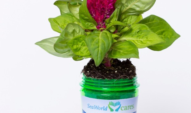 SeaWorld Cares Plant Bottle