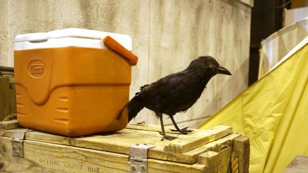 B45-raven