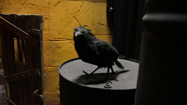 C61-raven