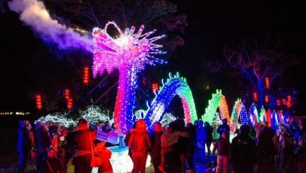 DM_Longleat Festival of Light_Porcelain Dragon (1)