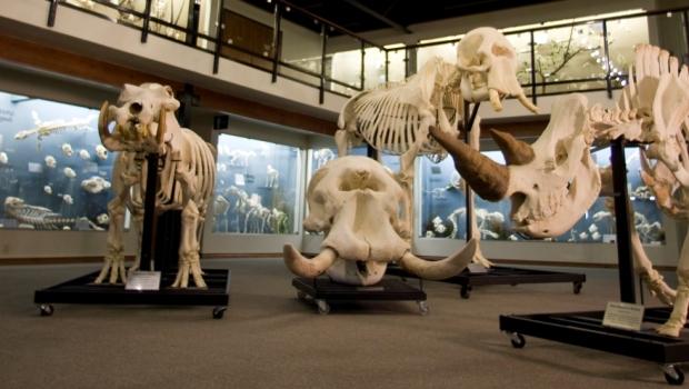 Skeletons museum I-Drive 360 Orlando