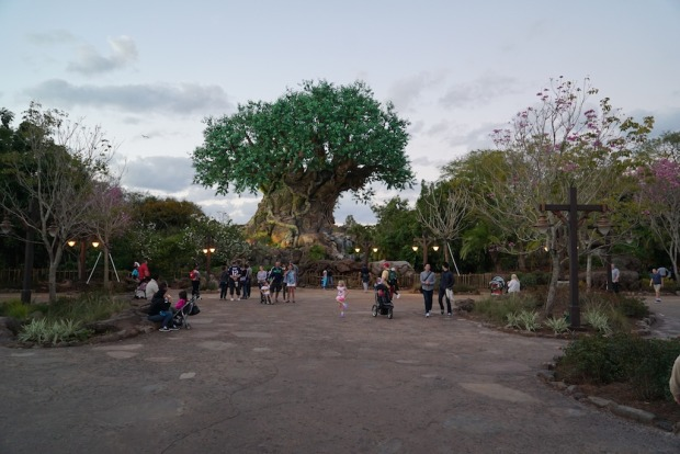 Animal Kingdom new tree sculptures 6