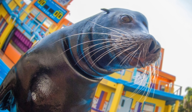 Clyde and Seamore's Sea Lion High SeaWorld Orlando