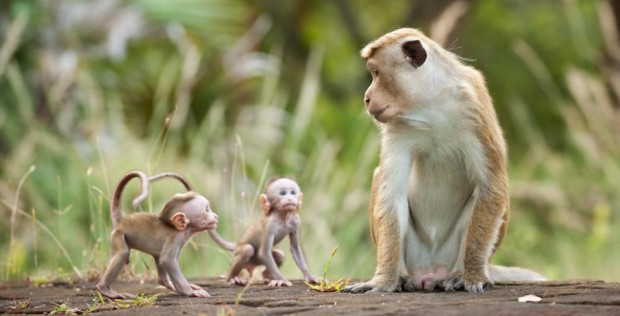 Baby and mom monkey