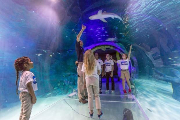 The orlando aquarium visitors can also explore florida s freshwater