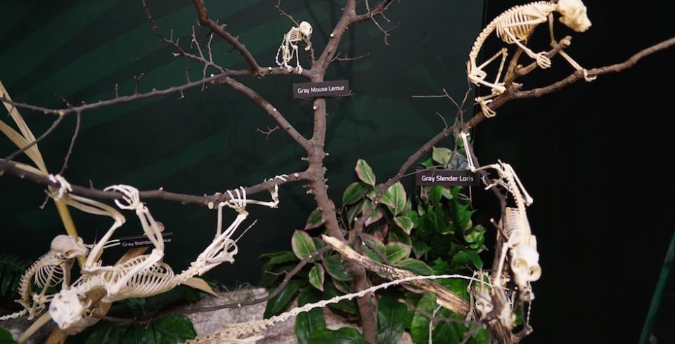 skeleton museum display in orlando