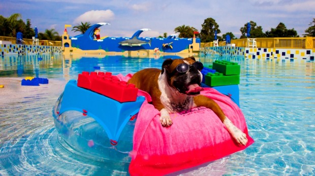 Everything is Paw-some Legoland Florida Water Park